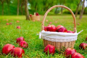 dārza āboli