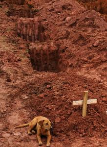 sunis nepamet kapa vietu