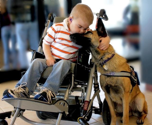 suns ir cilveka labakais draugs