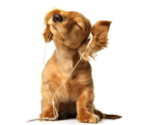 mīļākā mūzika