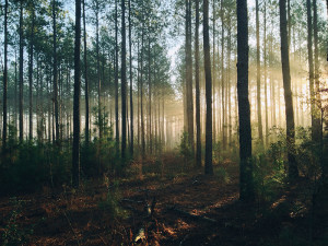 pastaiga mežā uzlabo veselību